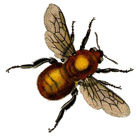 lg bee