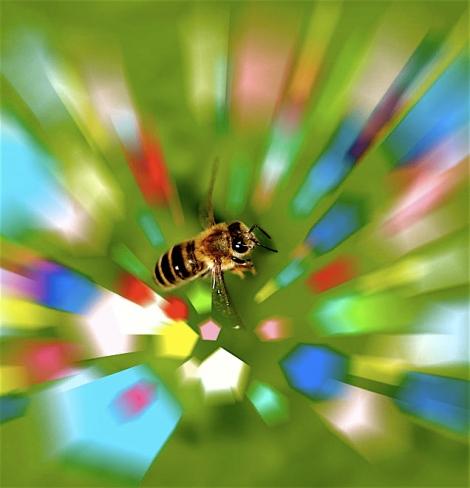 sn-bees